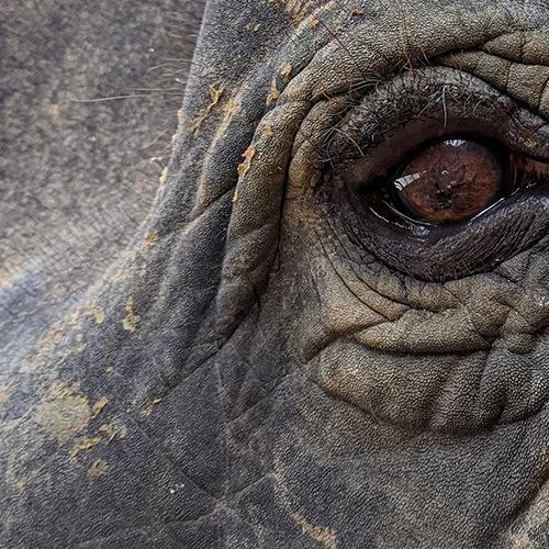 elephant bottom left 500